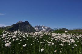 Berglandschaft im Warth am Arlberg