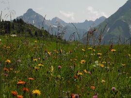 Best Alpine Wellness Hotel Warther Hof, Vorarlberg