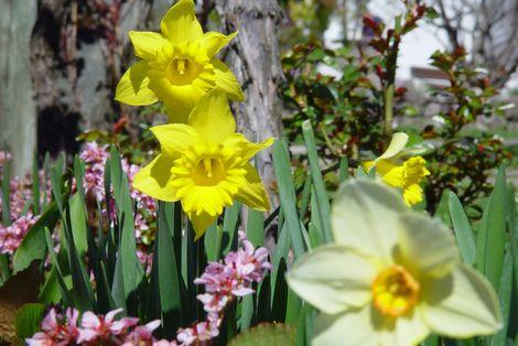 Frühlingsblüte 5=4