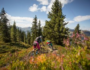 Small bike package -  A little mountain climb and downhill ride