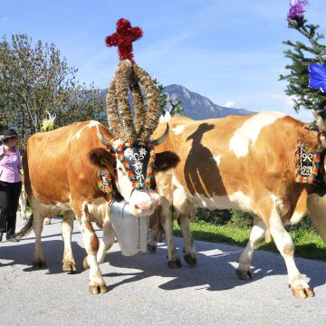 Kirchtag festival & cattle drive 2020 | 5 nights