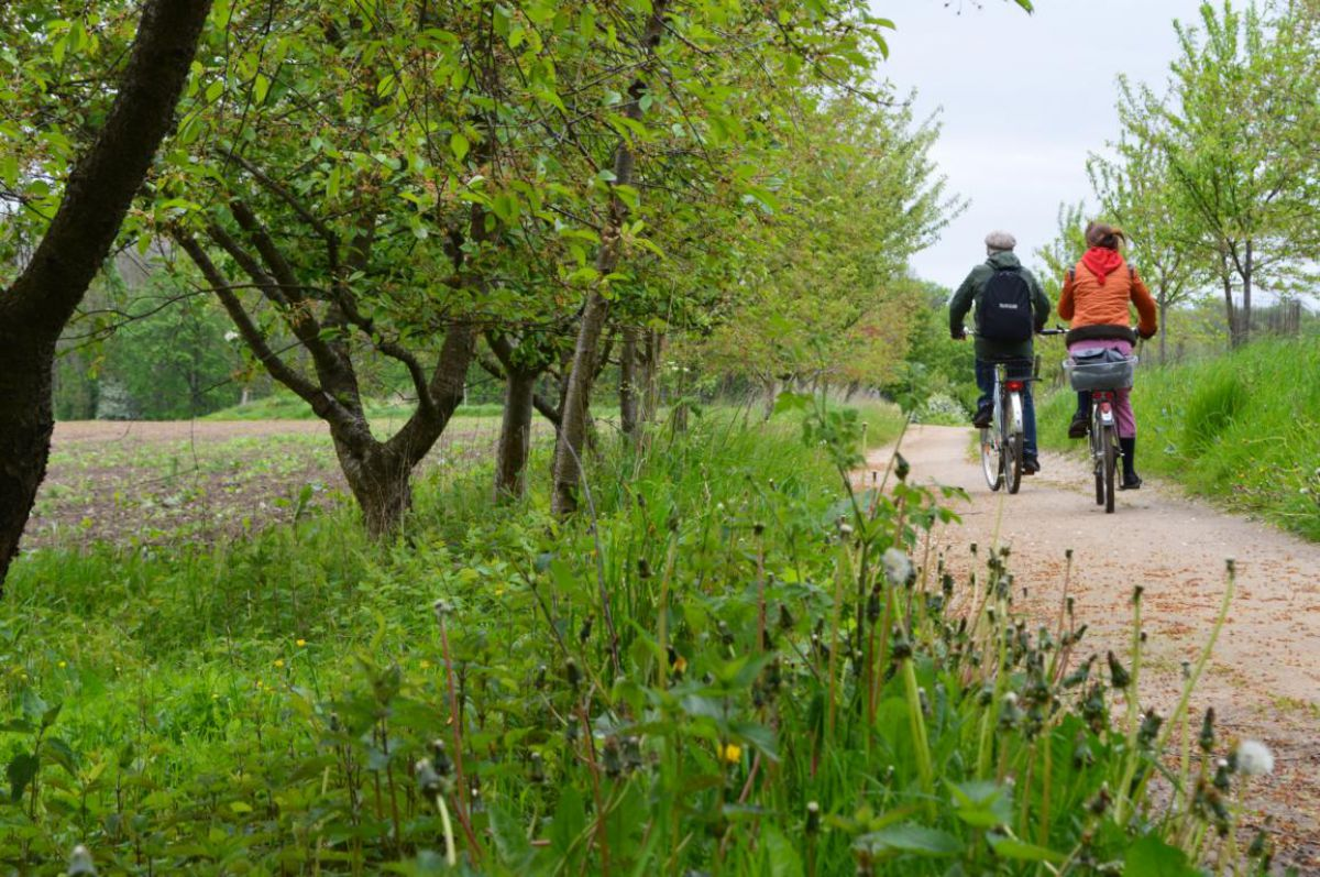 Klützer Winkel mit dem Fahrrad entdecken