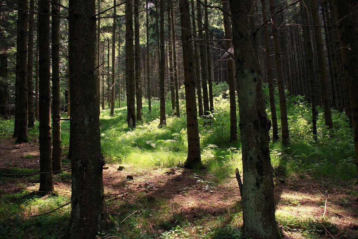 """WALDBADEN """"Kraft und Energie durch Bäume"""""""
