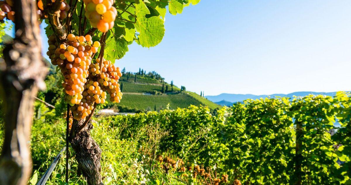 Vino e specialità dell' Alto Adige