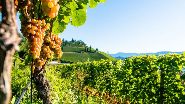 Südtiroler Wein und Spezialitäten