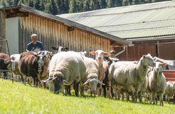 Biohotel Panorama, Mals, Trentino-Alto Adige, Italia (29/41)
