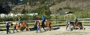 Riding lessons for advanced - childeren and adults