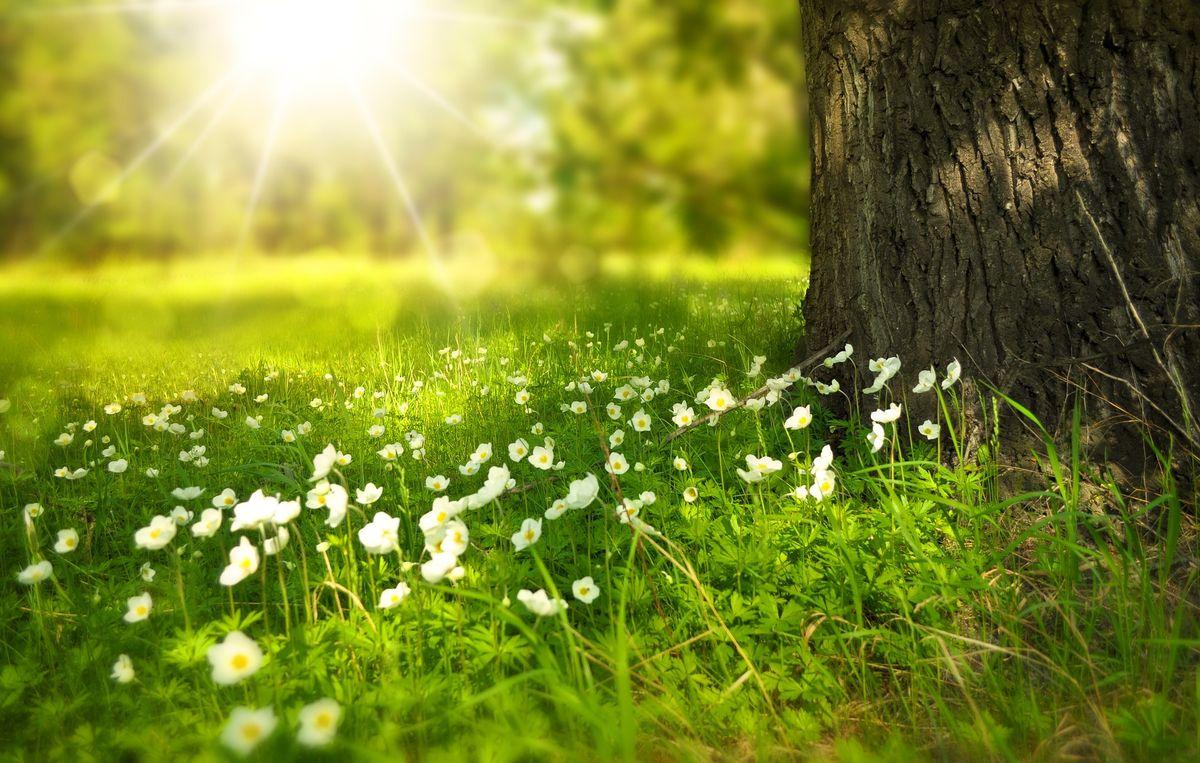Blühende Sommerwiesen, schattige Wälder