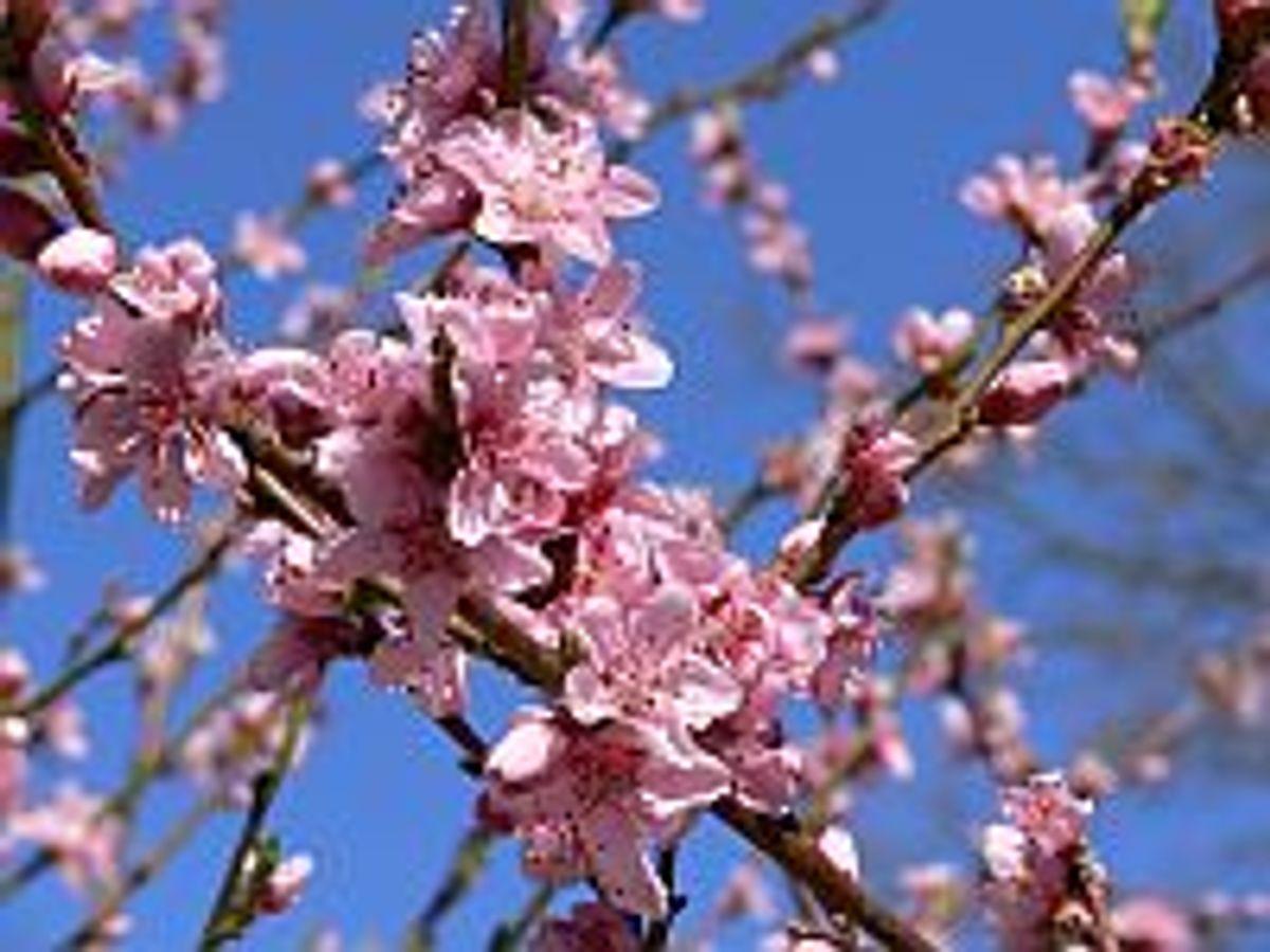 Frühling auf dem Darß 5 Nächte