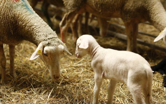 Biohotel Stiftsgut Wilhelmsglücksbrunn: Urlaub mit Tieren