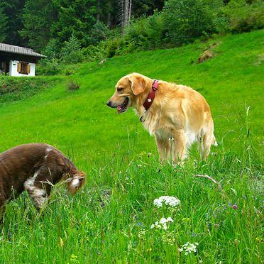 Sommer, Hütta Monika, Sankt Gallenkirch, Vorarlberg, Vorarlberg, Österreich