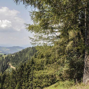 Sommer, Staller Brendl, Obdach, Steiermark, Steiermark, Österreich