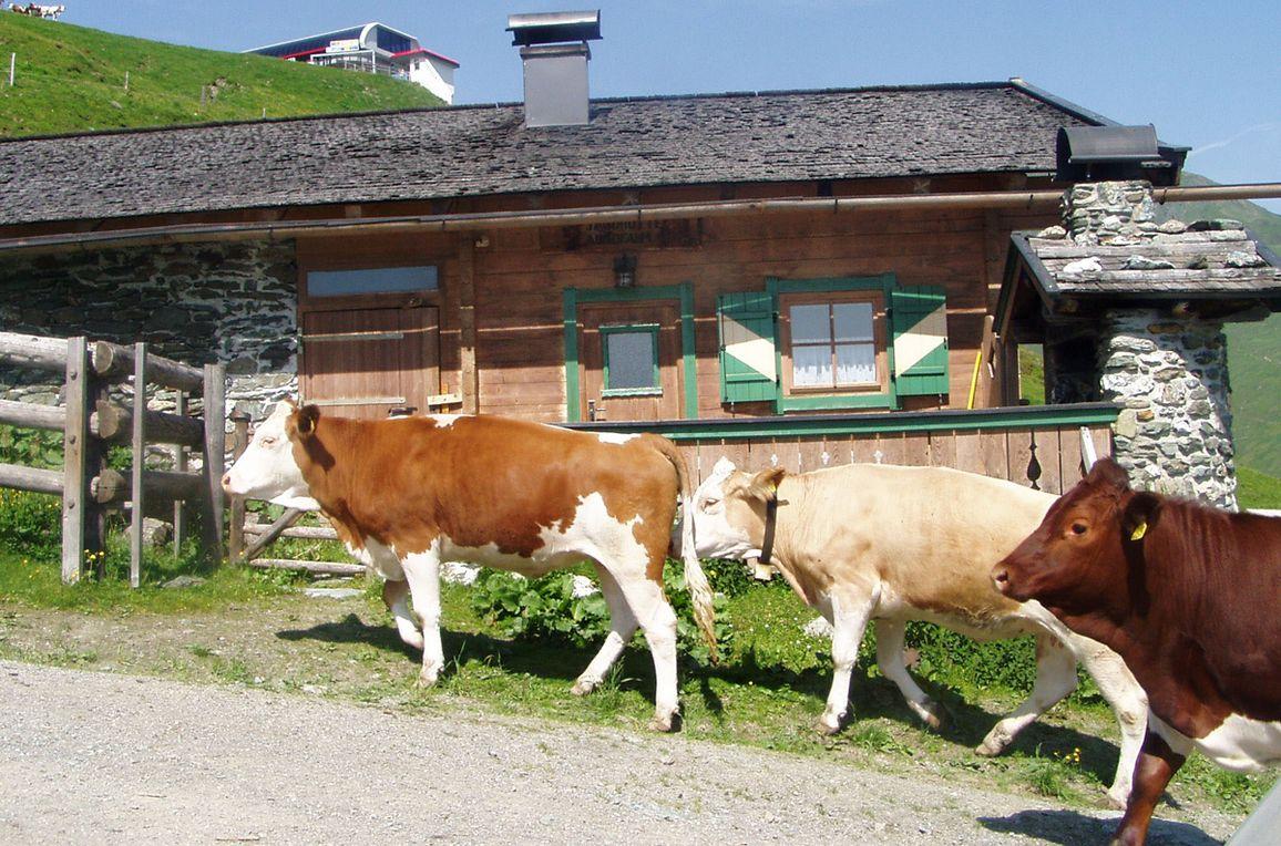 Jagdhütte Auhof, Seitenansicht