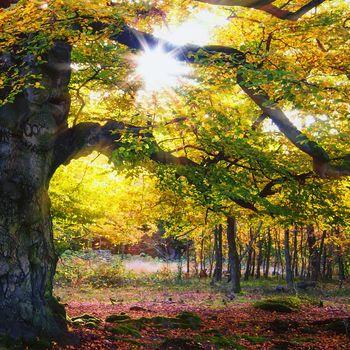 Herbst-Zauber