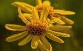 St. Johns wort & chamomile massage | Full body