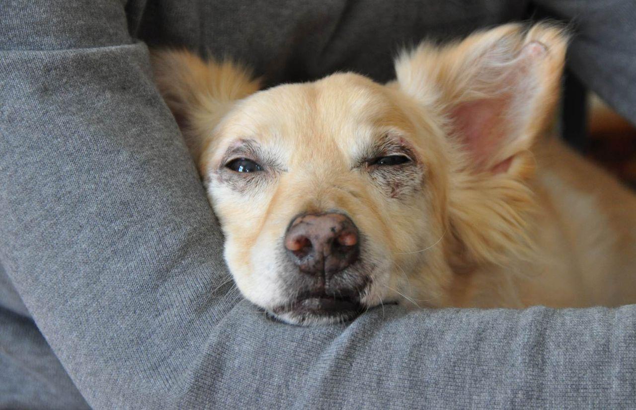 skippy-hund-DSC_1041.jpg