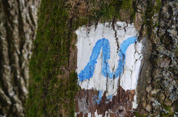 Unterwegs auf dem Neckarsteig | 3 Nächte
