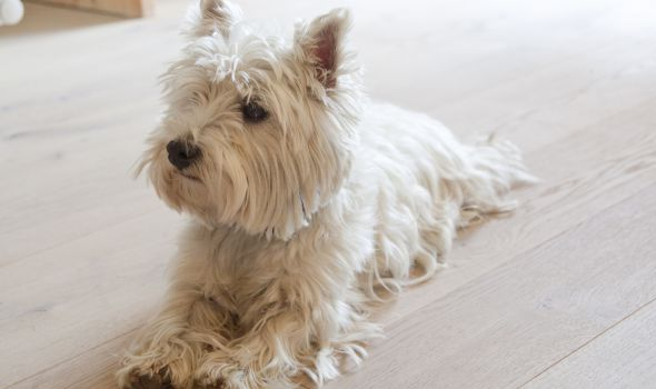 In and around the hotel with your four-legged friend …