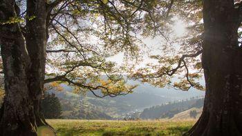 3 jours d'aventure en Forêt-Noire
