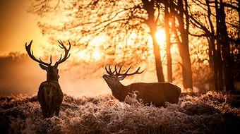 Sackmann's Autumn Days | High Season 3 nights
