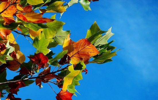 HerbstZEIT im Allgäu