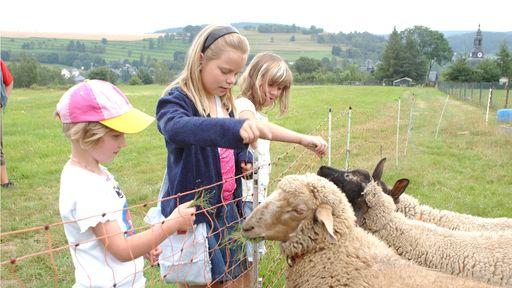 In den Streichelgehegen finden die Kinder den direkten Kontakt zu den Tieren.