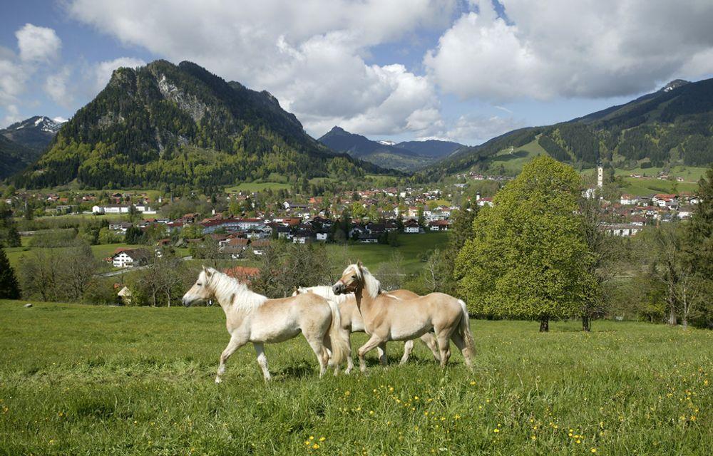 (P) Pferderanch Reitnachmittag