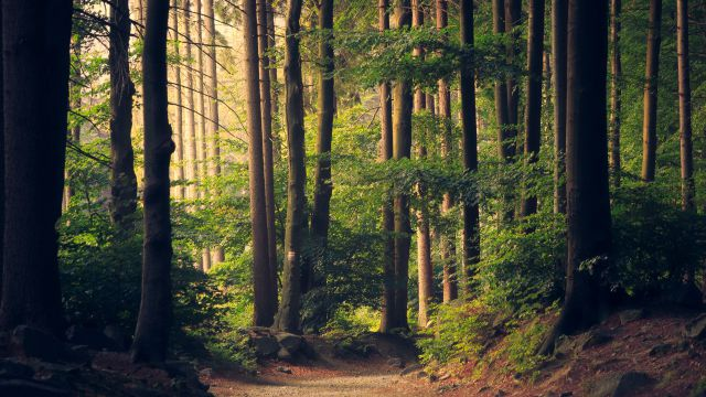 NEW: Forest bathing week. The most valuable medicine from the forest