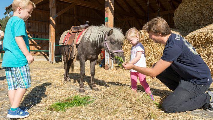 Urlaubsangebot: Erstes Reiterglück - Schreinerhof in Schönberg