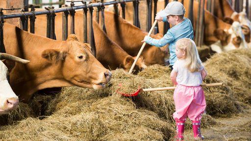 Die Stallarbeit auf einem Bauernhof hautnah miterleben im Familotel Schreinerhof.