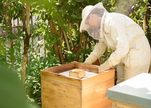 Biohotel Bavaria: Bienenwanderung - Biohotel Bavaria, Garmisch-Partenkirchen, Bayern, Deutschland