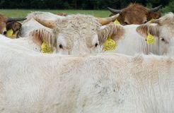 Biohotel LindenGut: Demeter Landwirtschaft - LindenGut, Dipperz, Hessen, Deutschland