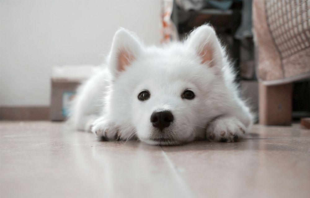 Hund - Dein treuer Begleiter im Urlaub auf familisch