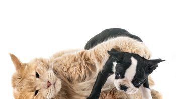 Hunde und andere Haustiere