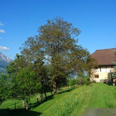 Almhaus Kronhof - Chalet Alpin, summer