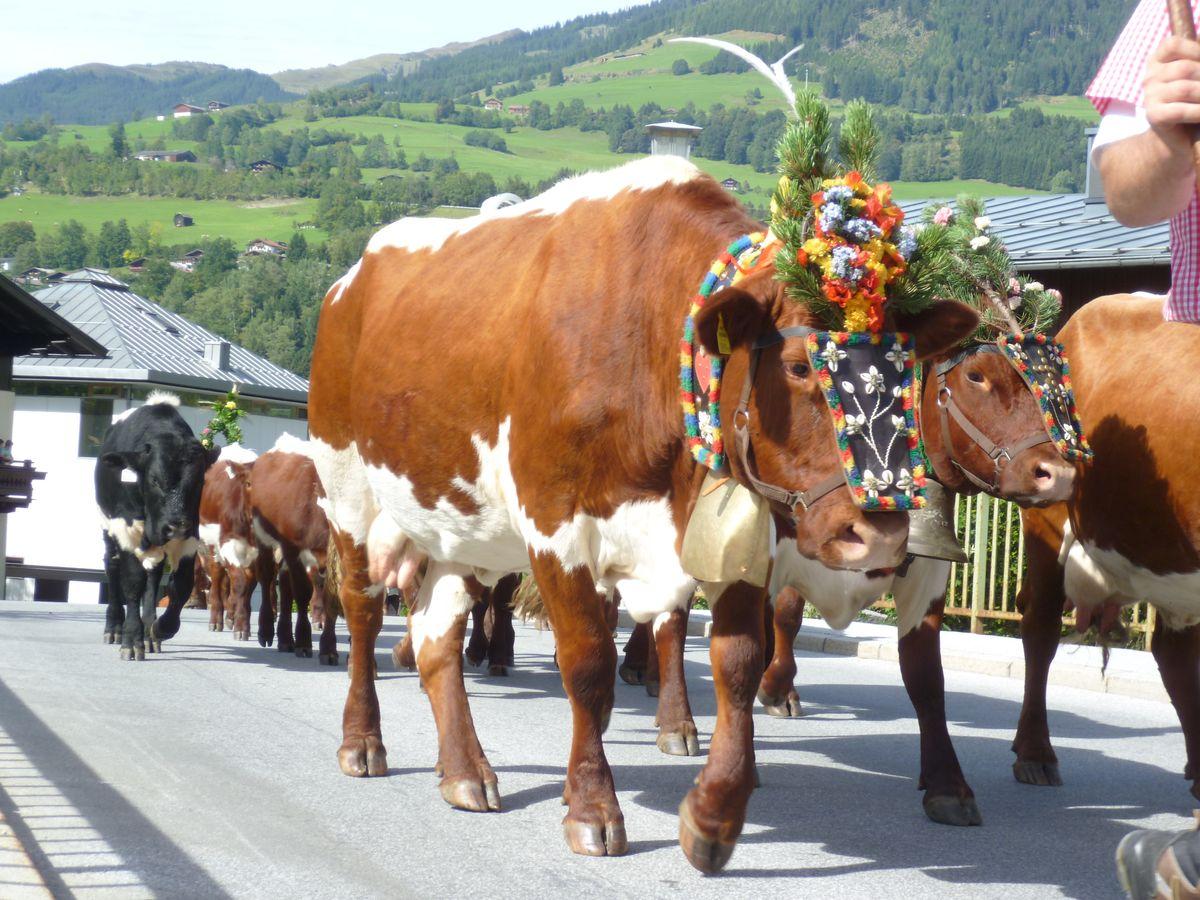 Almabtrieb - Bauernherbst 7=6