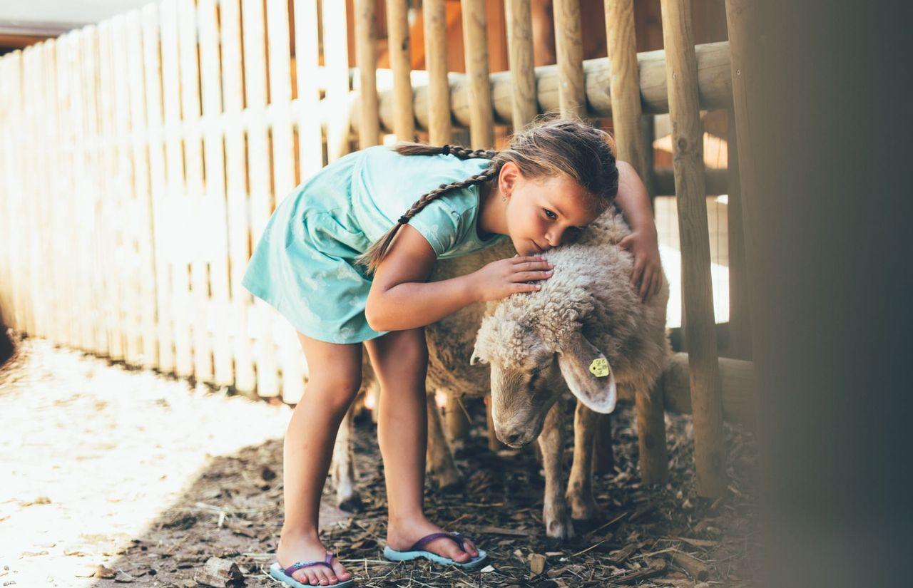 Kind mit Schaf im Streichelzoo
