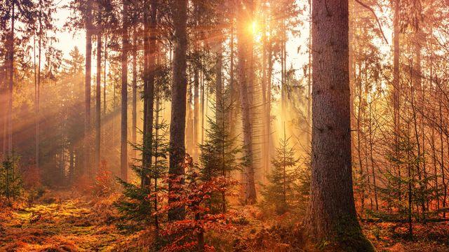 Entspannte Herbsttage