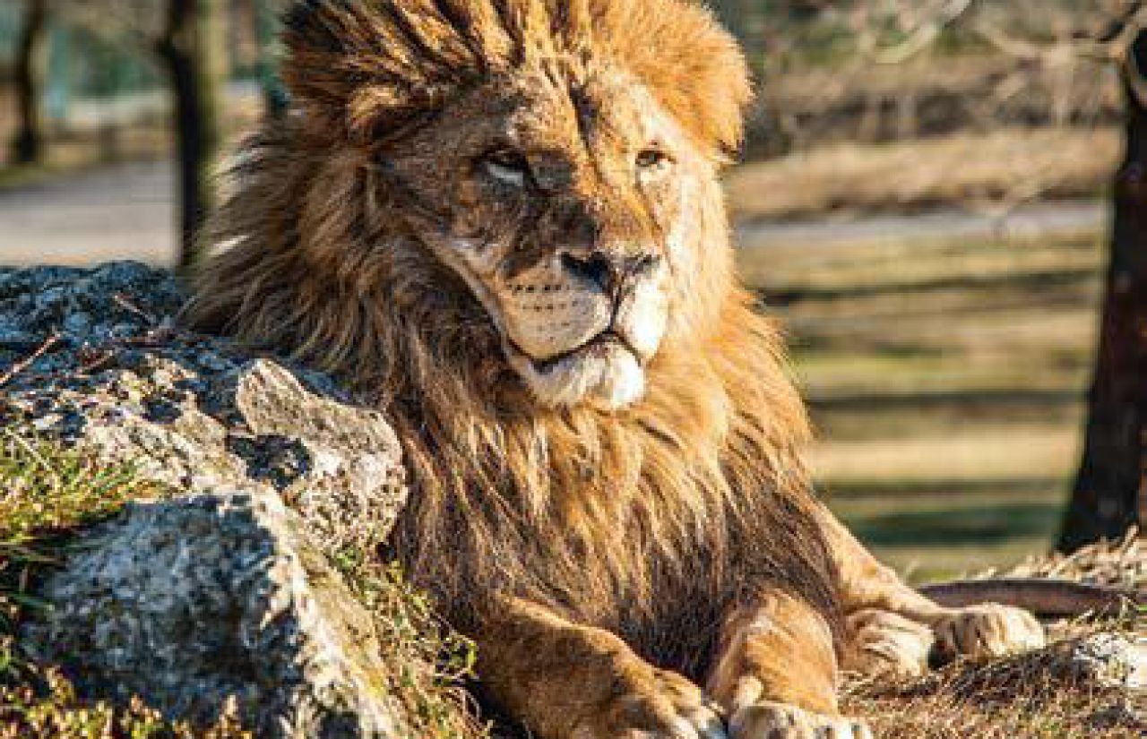 Tatzmania - Ein Stück Afrika mitten im Schwarzwald, möglich macht das der neue Zoo bei Löffingen