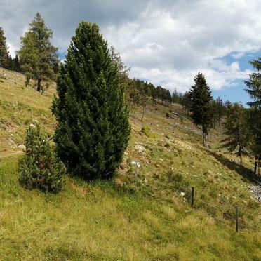 Sommer, Amberger Hütte, Paternion-Fresach, Nockregion, Kärnten, Österreich